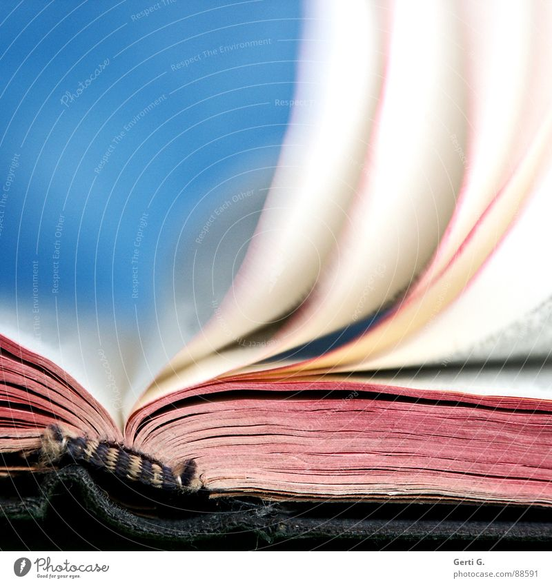 Blue White Red Bright Pink Open Characters Wind Book Closed Reading Letters (alphabet) Education Media Typography Blow
