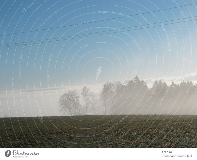 Sky Forest Meadow Fog Horizon Fog bank Cloud cover Above the clouds