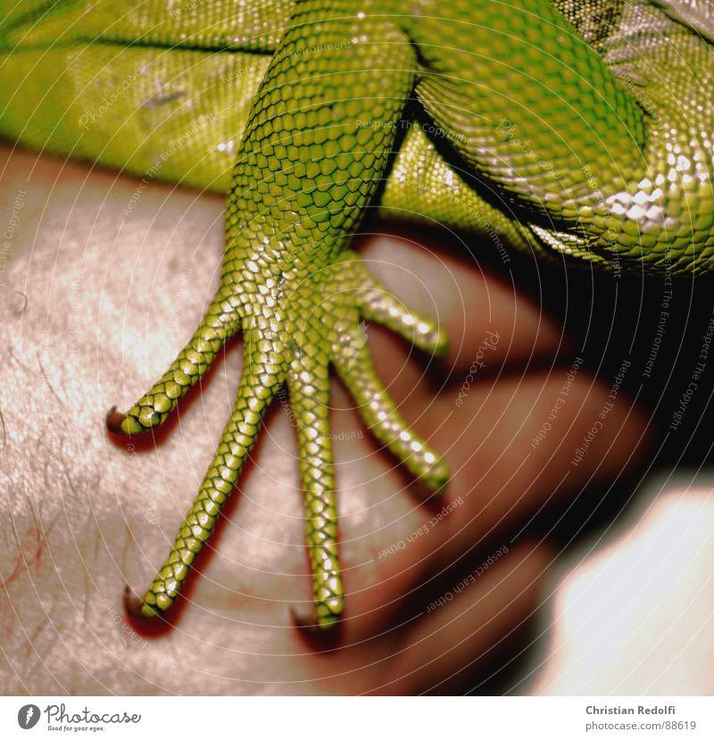 Green Hand Animal Skin Barn Rough Reptiles Saurians