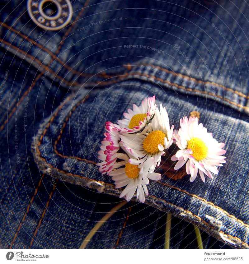 Flower Summer Jump Blossom Spring Clothing Jeans Jacket Jewellery Beautiful weather Daisy Buttons Embellish Meadow flower Buttonhole Jeans jacket