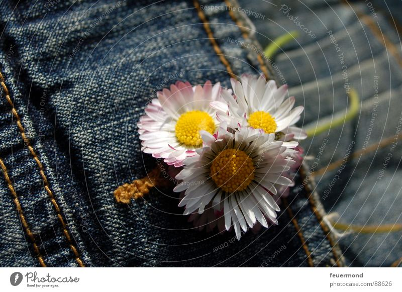 Bouquet in the buttonhole Daisy Jacket Buttonhole Flower Spring Jeans jacket Jewellery Buttons Embellish Blossom Jump Summer Clothing Beautiful weather summery