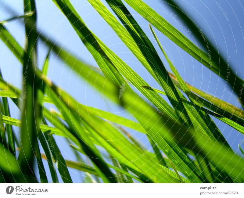 Nature Beautiful Green Blue Summer Meadow Grass Spring Park Warmth Field Wind Weather Construction site Clean Physics
