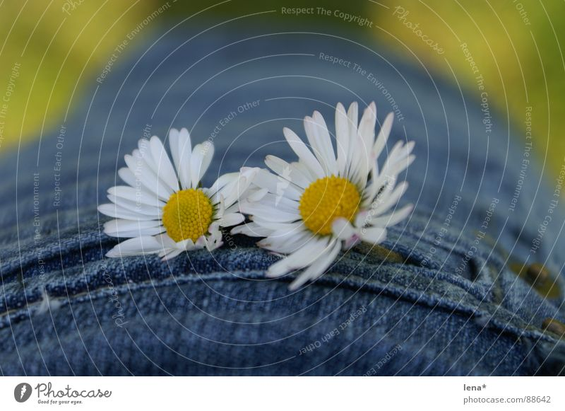 little flowers Flower Summer Spring Seasons White Yellow Green Blossom Bag Plant Daisy Mini skirt Pollen Stitching Denim blue Beautiful weather Physics 2