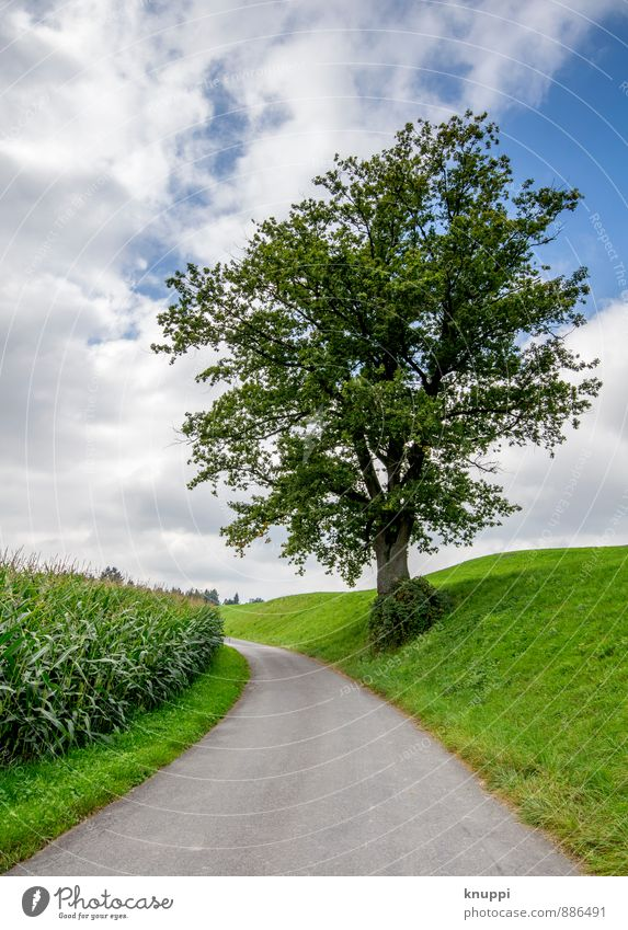 Sky Nature Blue City Plant Green Summer Tree Landscape Leaf Clouds Environment Street Grass Lanes & trails Gray
