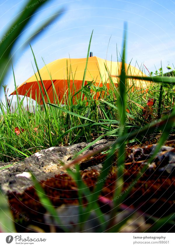 THE BEGINNING Cloppenburg Umbrella Sunshade Storm Clouds Grass Blade of grass Meadow Summer Field Green Spring Flower meadow Environment Summery Plant Sunbeam