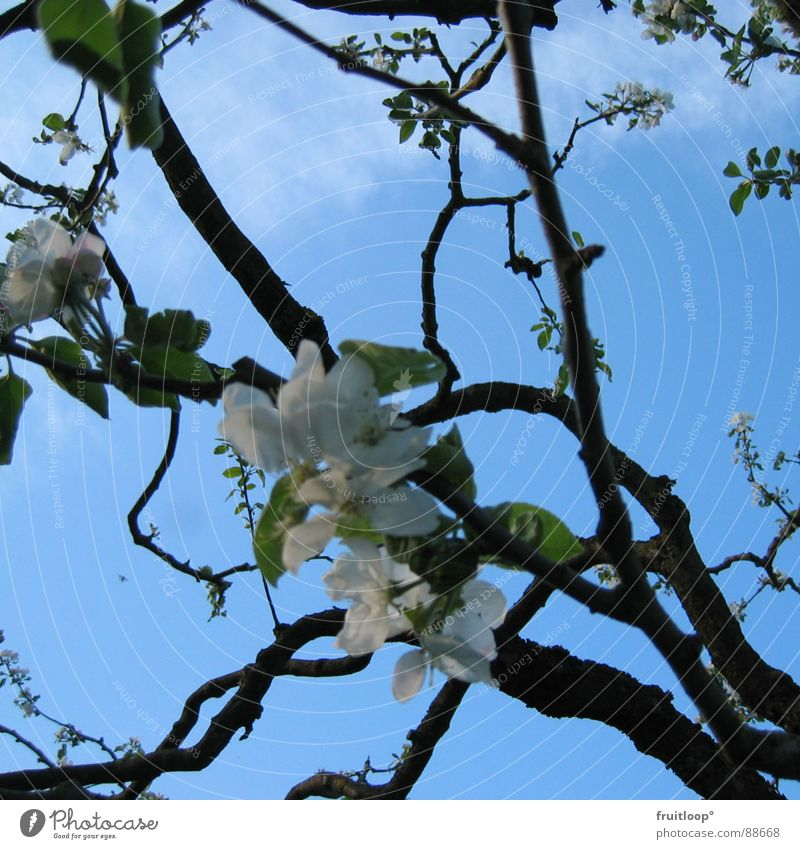 Sky Blue Blossom Spring Garden Branch Airy