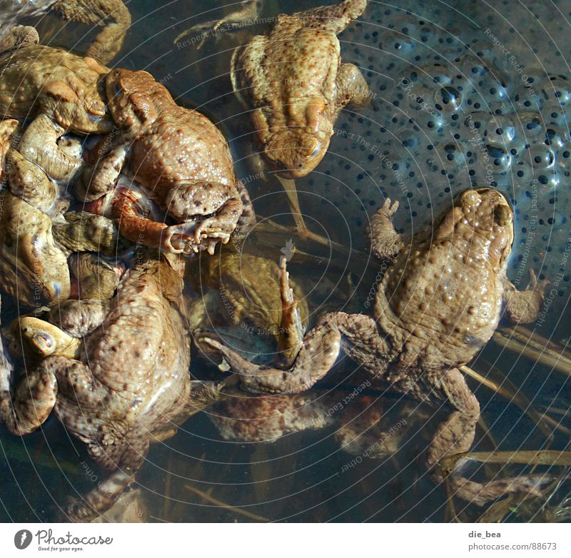 Spring fever - extreme Smoothness Propagation Tadpole Productive Commercial Frog Painted frog agglomeration blobs