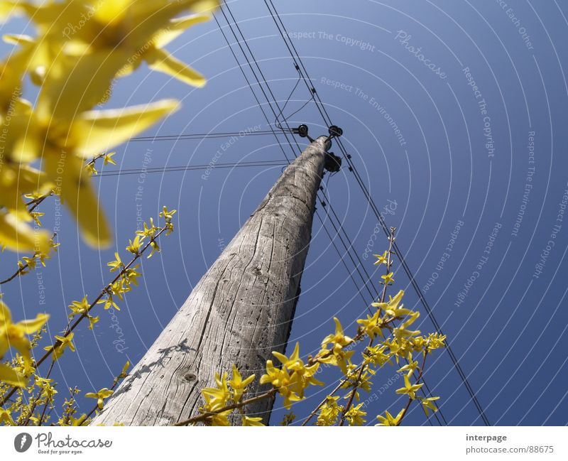 Easter stream Electricity Electricity pylon Yellow Worm's-eye view Industry Spring wooden pole forsyzias blossoms Blue Upward Sky