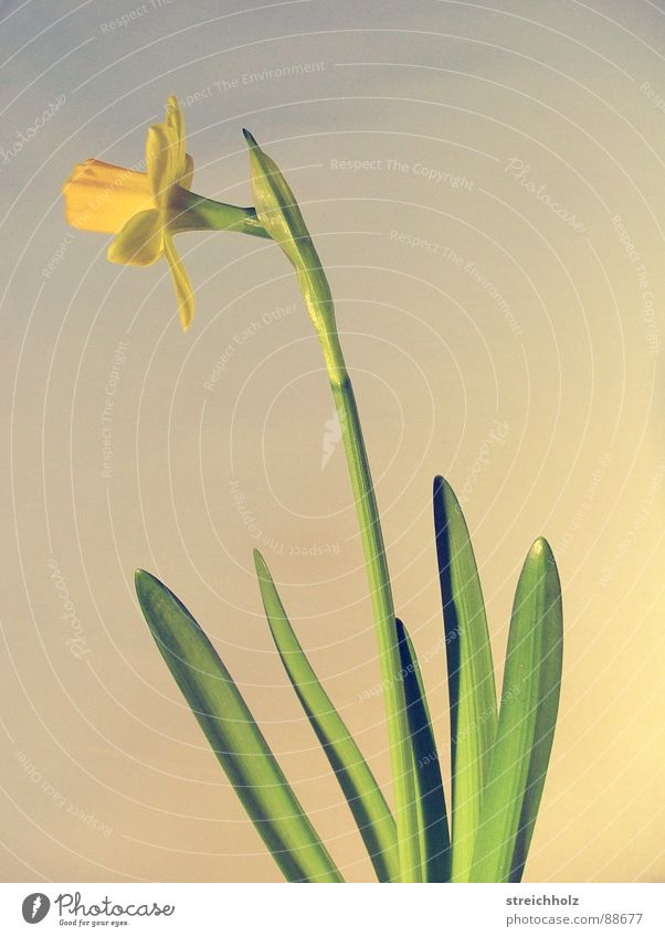 Flower Joy Yellow Blossom Happy Pink Contentment Growth Blossoming Hope Bud Optimism Pollen Pistil Easter egg Onion