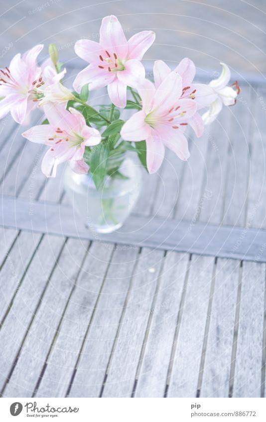 lilium Flower Bouquet Lily Esthetic Beautiful Gray Green Pink Romance Idyll Living or residing Gift Souvenir Flower vase Table Pallid Pistil Stamen Delicate