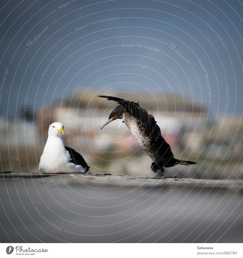 Attack! Vacation & Travel Tourism Adventure Environment Nature Cloudless sky Harbour Animal Wild animal Bird Seagull Gull birds Cormorant 2 Relaxation Dance