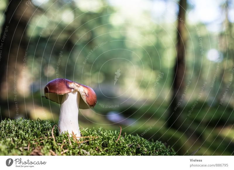 Forest Life VI Nature Landscape Plant Moss Woodground Mushroom Mushroom cap Deserted Copy Space left Shallow depth of field Blur Detail