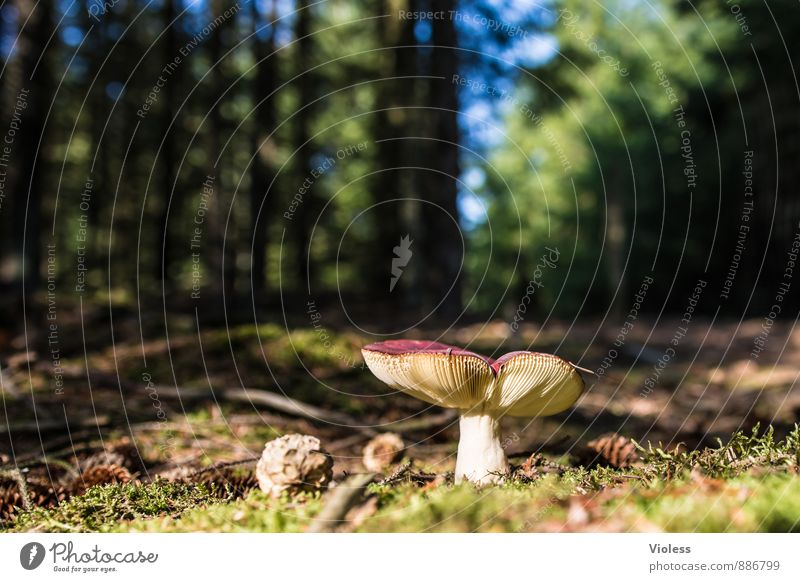 Forest life II... Environment Nature Landscape Moss Natural Green Mushroom Amanita mushroom Woodground Deserted Blur Worm's-eye view