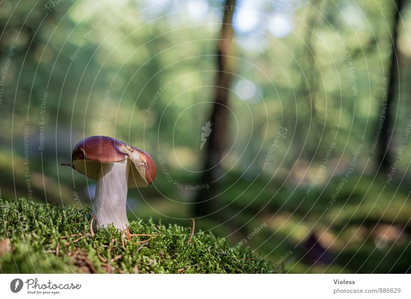 forest life ... Nature Landscape Plant Moss Forest Green Woodground Mushroom Mushroom cap Deserted Copy Space left Shallow depth of field Blur Detail