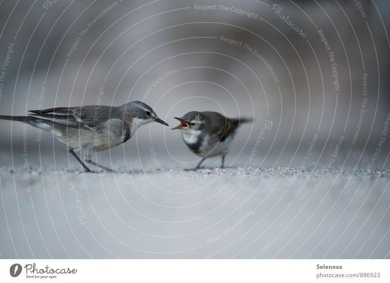 Nature Animal Environment Baby animal Spring Wild animal Pigeon Feeding