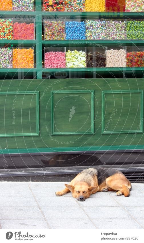 candies Town Downtown Pedestrian precinct Street Animal Pet Dog 1 Concrete Eating To enjoy Sell Authentic Kitsch Delicious Retro Many Multicoloured Joy Safety