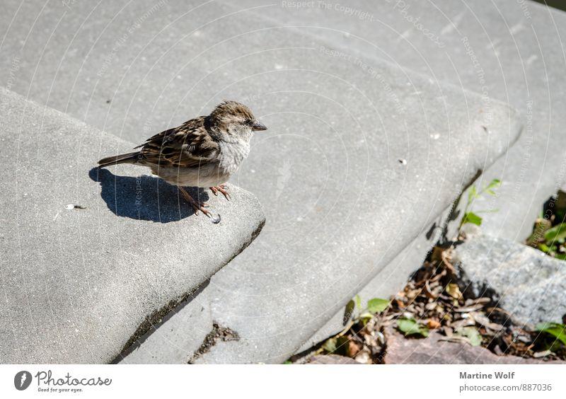 hop down Animal Lijepaja Latvia Europe Stairs Wild animal Bird Sparrow Passerine bird 1 Brave Nature Subdued colour Exterior shot Deserted Neutral Background
