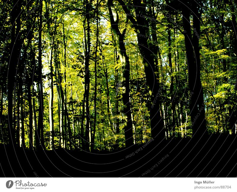 forest Forest Tree Green Narrow Landscape forest game black Colour Sky Nature afforestation tarzan