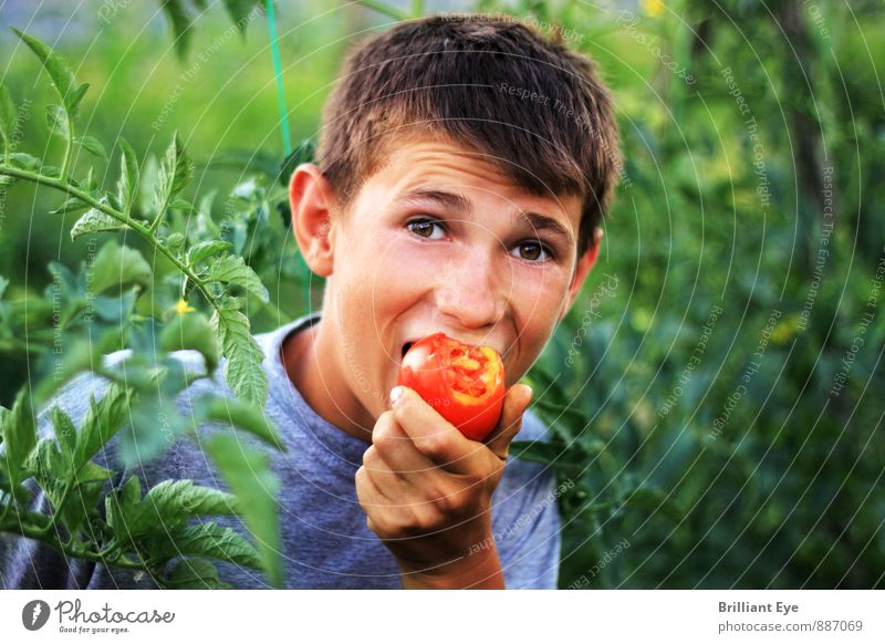 Happy boy bites the tomato Food Vegetable Fruit Eating Organic produce Vegetarian diet Healthy Eating Agriculture Forestry Human being Masculine Child