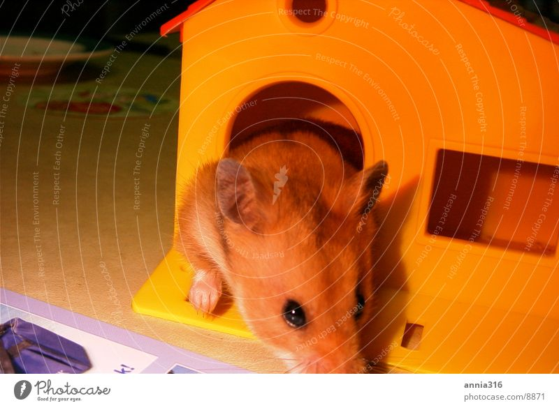 House (Residential Structure) Animal Pet Rodent Hamster