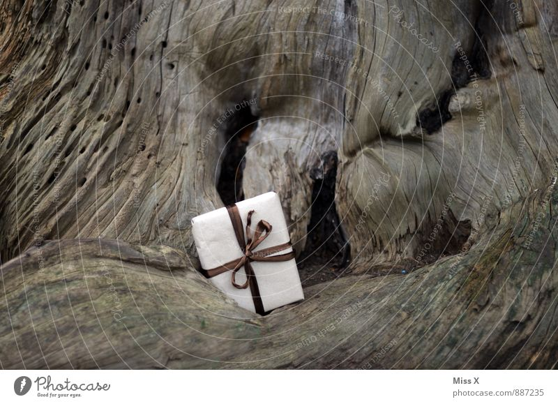 filing Birthday Tree Packaging Package Bow Wait Gift Delivery Donate Forget Hide Wood Burl wood Root Colour photo Subdued colour Exterior shot