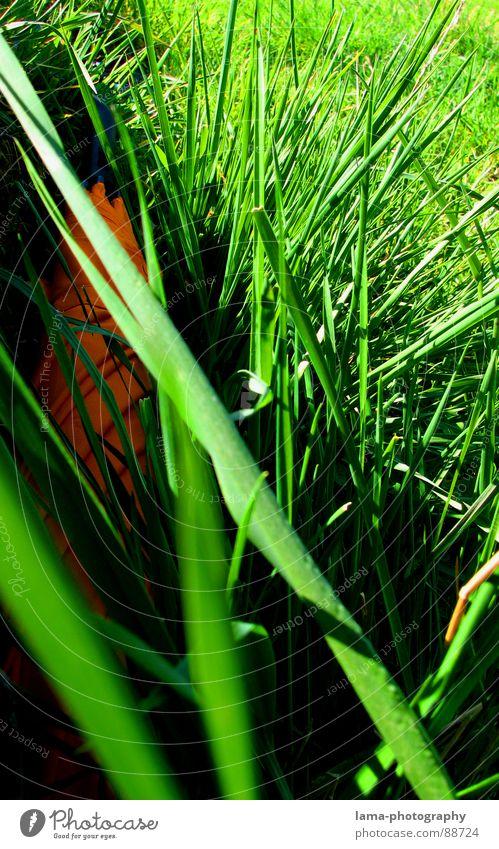 Nature Green Plant Summer Clouds Colour Meadow Environment Landscape Grass Garden Spring Bright Rain Orange Field