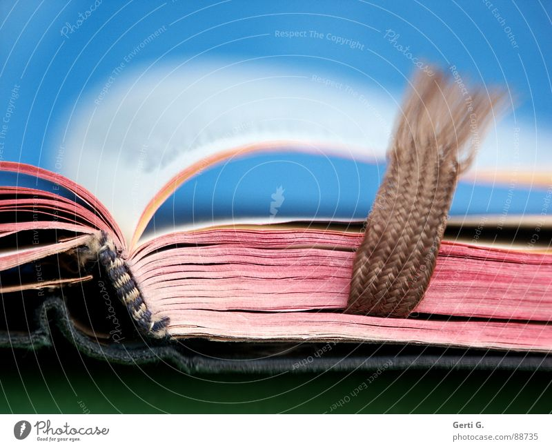 Blue White Red Art Brown Bright Pink Open Characters Wind Book Closed Culture Reading Letters (alphabet) Education