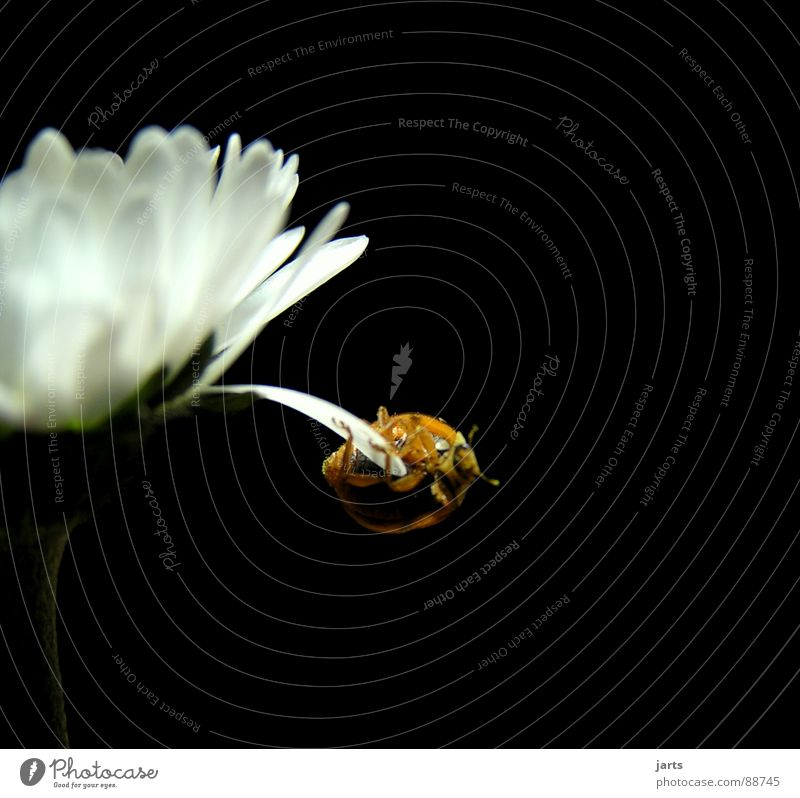 balancing act Flower Circus Acrobatics Hold Blossom Art Dangerous Crash Hover Fear Panic Macro (Extreme close-up) Close-up Power Force Beetle Brave Hero Threat