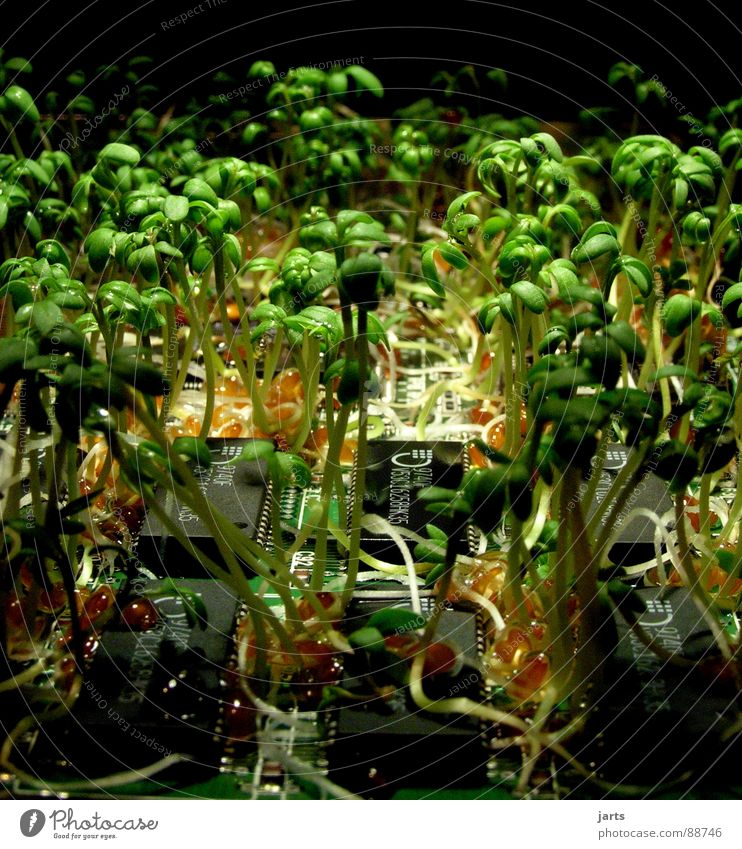 revolution Science & Research Nature Plant Beginning Transience Future Circuit board Studio shot Biotechnology Bionic Processor Microchip Smart card Cress