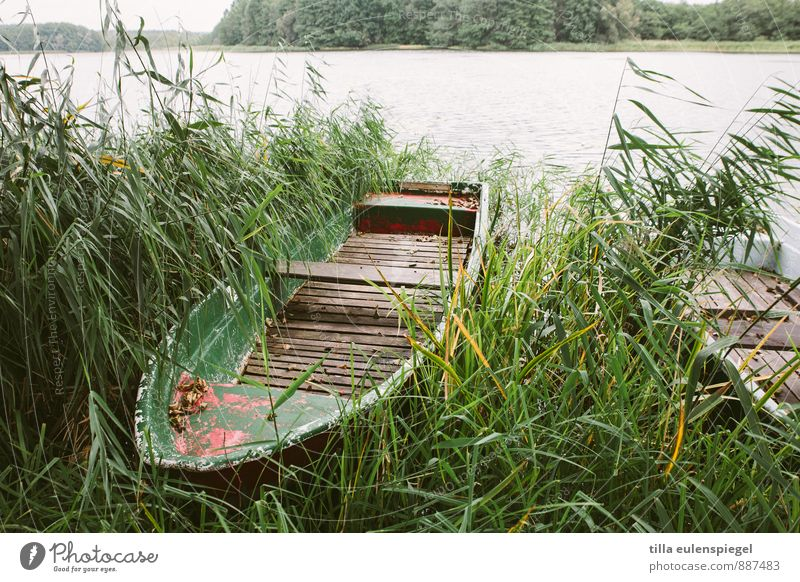 Nature Vacation & Travel Old Plant Green Water Loneliness Cold Environment Autumn Grass Lake Horizon Leisure and hobbies Wild Gloomy