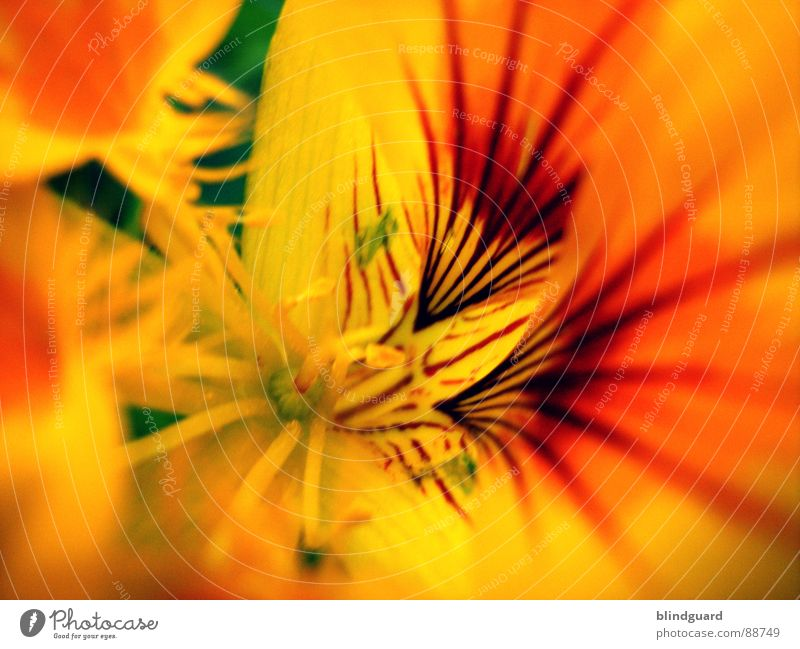 summerfeelings Flower Yellow Summer Sprinkle Macro (Extreme close-up) Blur Plant Beautiful Pistil Seed Orange Close-up sharp Garden