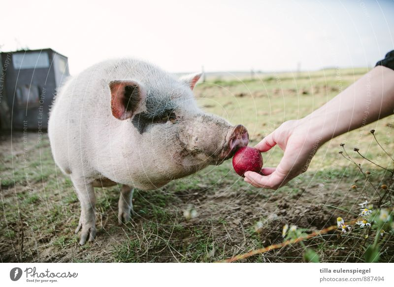 Vacation & Travel Hand Animal Healthy Eating Meadow Food Leisure and hobbies Field Dirty Fruit Arm Farm Apple Odor Pet