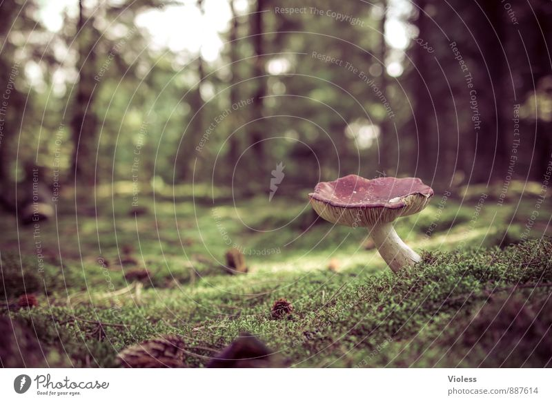 fairytale forest... Nature Landscape Plant Moss Forest Dark Fantastic Green Woodground Mushroom Mushroom cap Deserted Copy Space left Blur