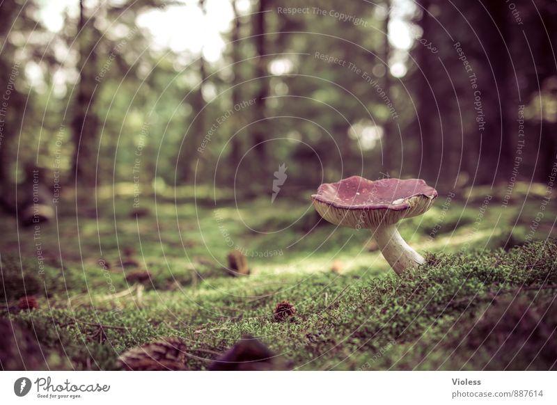 Nature Plant Green Landscape Dark Forest Fantastic Moss Mushroom Woodground Mushroom cap