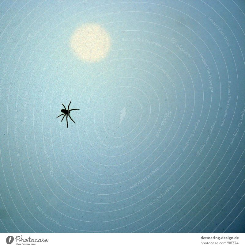 spider in the sunset* Spider Sunset Pane Frosted glass Insect Light blue Bright yellow Yellow Animal Progress Crawl Disgust Fear Creepy Dangerous Glass 8 legs