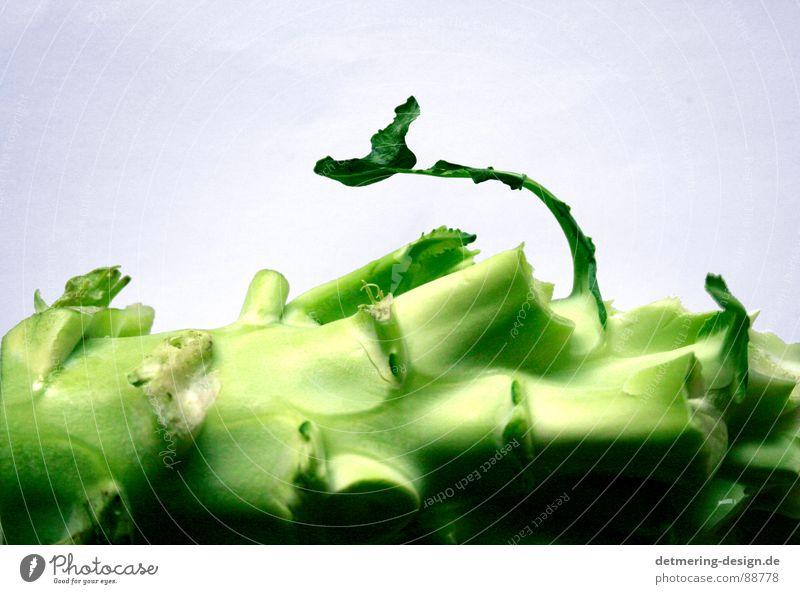 einsammer brocolie* Stalk Broken Vitamin Delicious Bright green Dark green White Studio shot Raw vegetables Clean Round Yellow Green Life Healthy Fork Crunchy