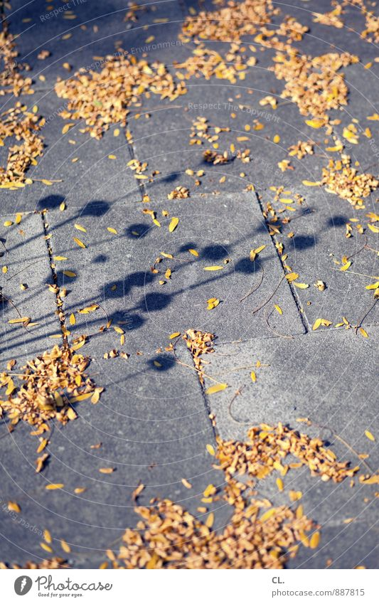 look down Environment Nature Plant Flower Blossom Lanes & trails Sidewalk Faded Transience Change Shadow play Stalk Colour photo Exterior shot Deserted Day