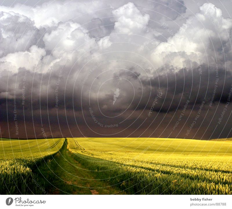 here comes something Canola Clouds Yellow Horizon Weather Nature Landscape Thunder and lightning Threat black Lanes & trails