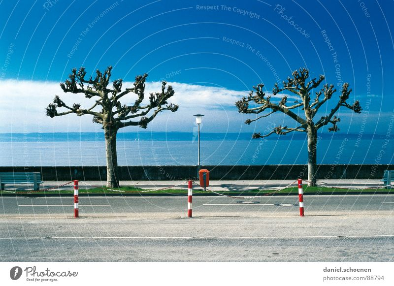 Sky Tree Blue Winter Lake Coast Arrangement Row Traffic infrastructure Bizarre Symmetry Lake Constance Meticulous