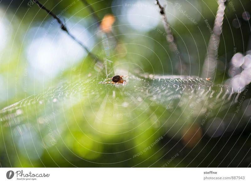 Tierisch gut: Spinnerin Forest Animal Spider 1 Disgust Fear Spider's web spiderman Spring Autumn Back-light Colour photo Multicoloured Exterior shot