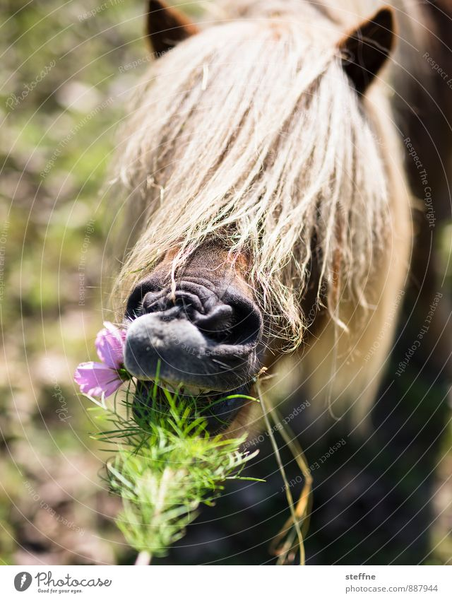 Life is not a pony farm Sunlight Spring Summer Autumn Flower Animal Horse 1 To feed Feeding Pony Bangs Mane Colour photo Animal portrait