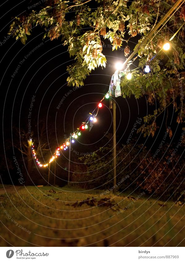 At night it gets colourful Garden Night life Summer Tree Meadow Fairy lights Clothesline Electric bulb Glittering Illuminate Simple Positive Multicoloured Moody