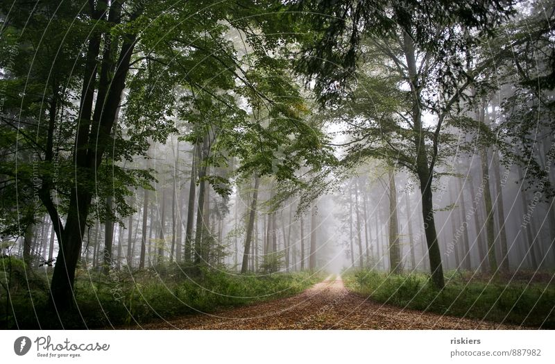 cloud forest Environment Nature Plant Autumn Weather Fog Forest Dark Cold Natural Brown Green Trust Safety Calm Idyll Tree Lanes & trails Colour photo