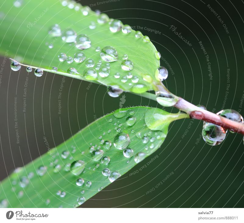 Plant Green Summer Water Leaf Calm Autumn Natural Small Glittering Growth Fresh Drops of water Climate Simple Wet