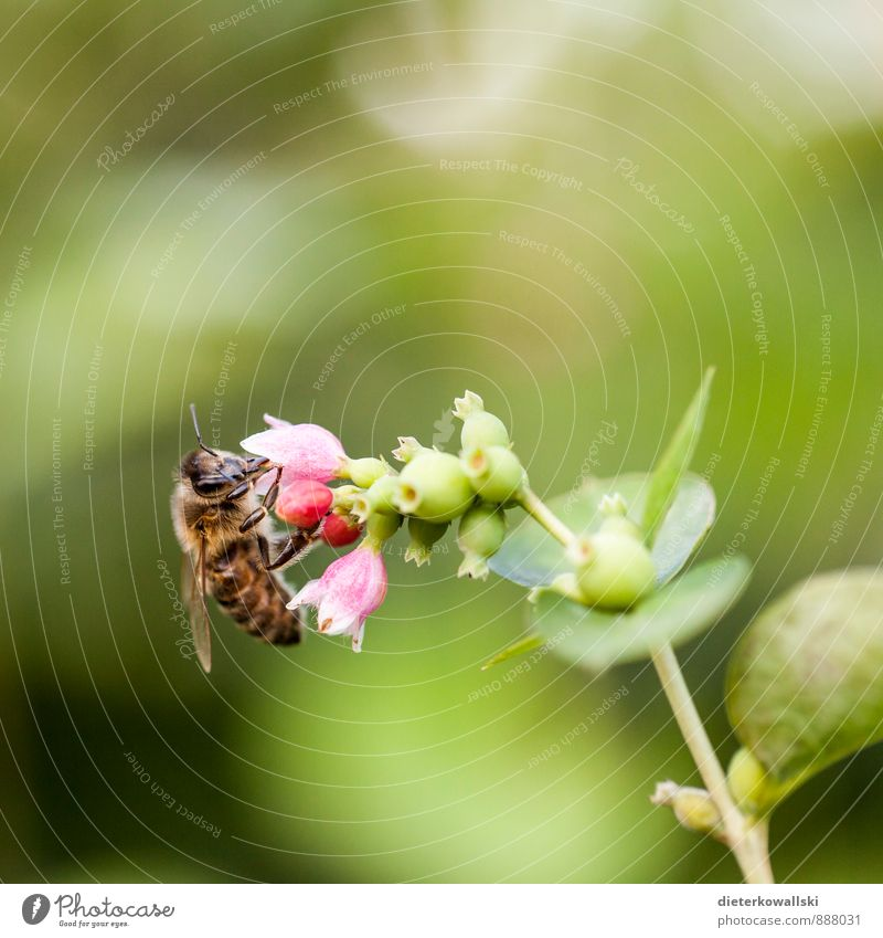 busy bee Environment Nature Plant Bee 1 Animal To feed Colour photo Exterior shot