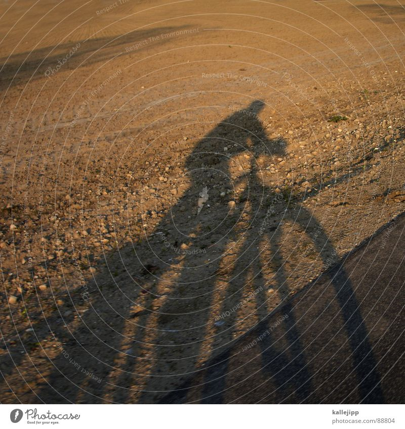 easy rider II Bicycle Self portrait Motorcyclist Field Agriculture Sunset Cycling tour Cycle path Brandenburg Mountain bike Playing Shadow Landscape