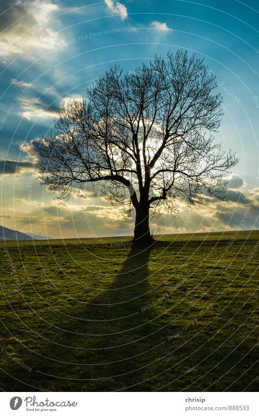 Sky Nature Blue Plant Green Sun Tree Landscape Clouds Far-off places Dark Environment Warmth Meadow Air Weather
