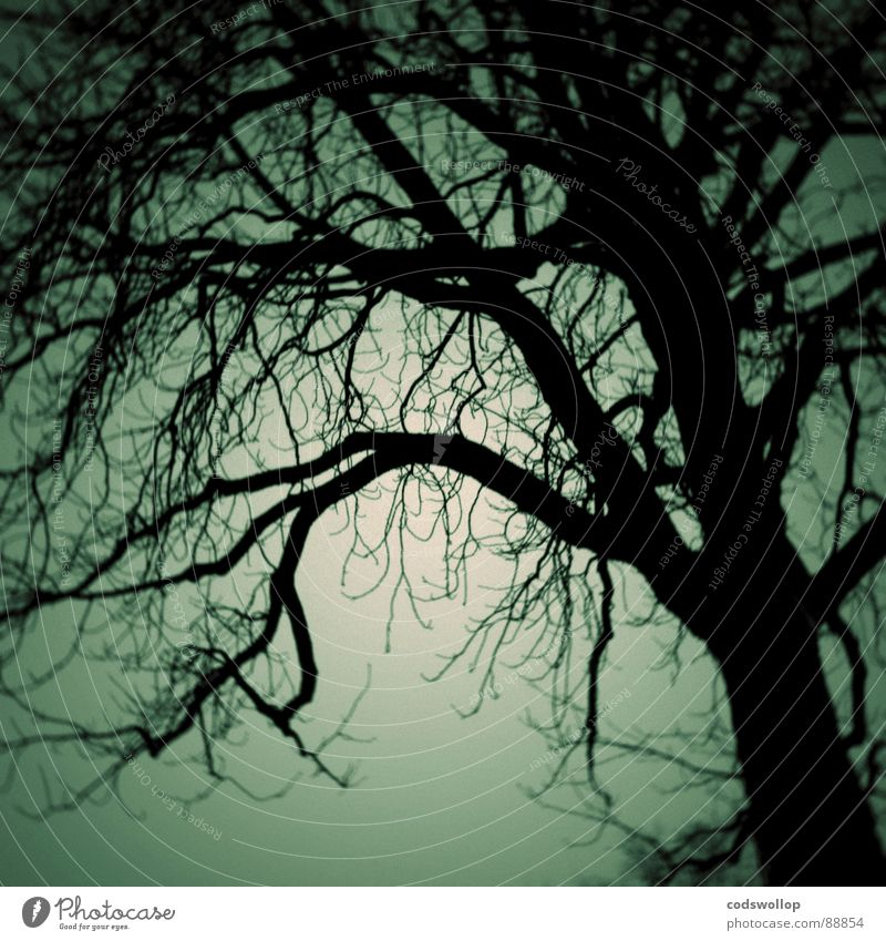 Tree Forest Dark Fear Walking Branch Creepy Doomed Panic Witch Jinxed Alarming Wood flour Midnight
