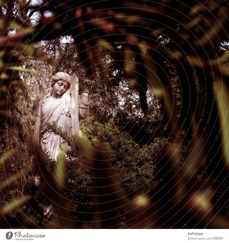 Sky Life Death Sadness Religion and faith Grief Angel Peace Fir tree Statue Ghosts & Spectres  Evil Belief Cemetery Devil