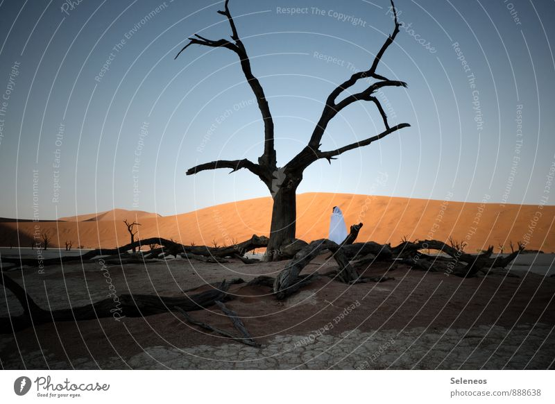 Death Vlei Vacation & Travel Tourism Trip Adventure Far-off places Freedom Human being Woman Adults 1 Environment Nature Landscape Sky Cloudless sky Tree Desert